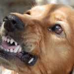 When your dog is turning aggressive because they are frustrated, there is a known name for this, being barrier frustration, or redirected aggression. This essentially means that they are feeling this way because they aren't able to do something that they want to, which leads them to take out their frustration in an aggressive way.